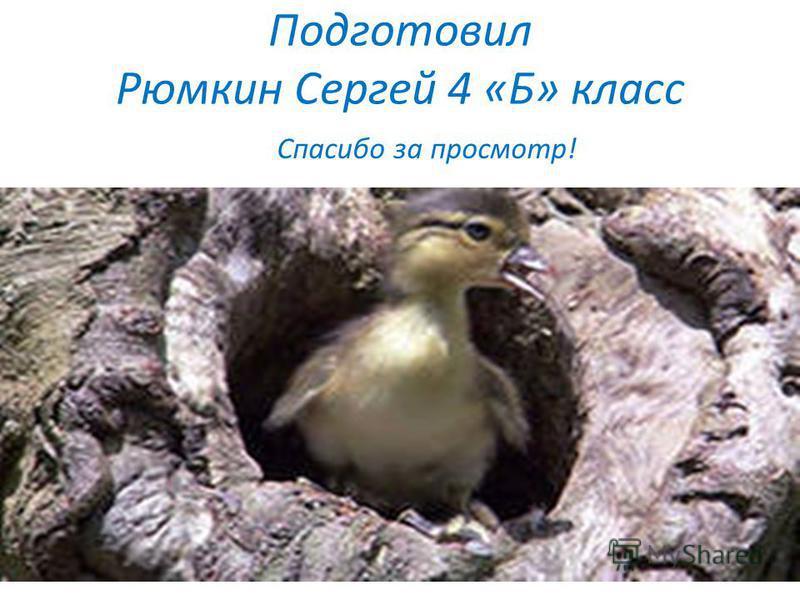 Подготовил Рюмкин Сергей 4 «Б» класс Спасибо за просмотр!