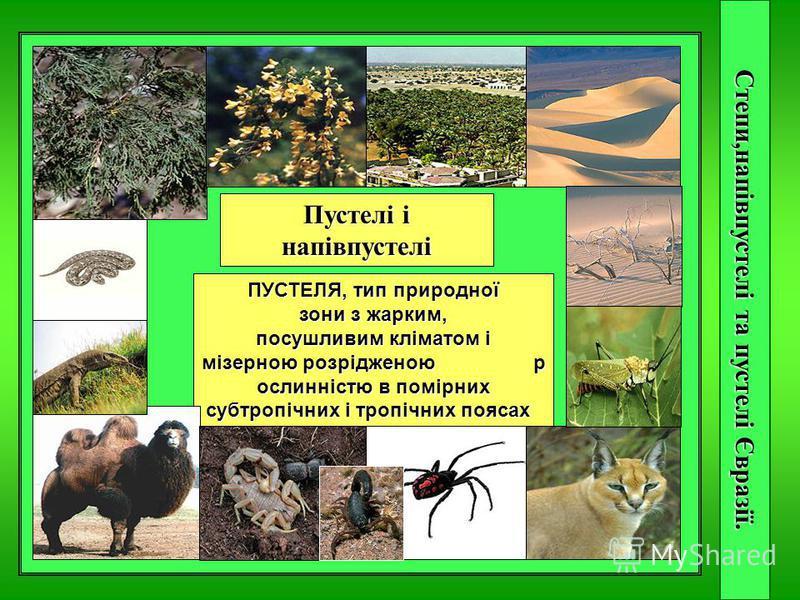 Степи,напівпустелі та пустелі Євразії. степи СТЕПЬ, тип биома с безлесной травянистой растительностью в умеренных и субтропических поясах Пустелі і напівпустелі ПУСТЕЛЯ, тип природної зони з жарким, посушливим кліматом і мізерною розрідженою р ослинн