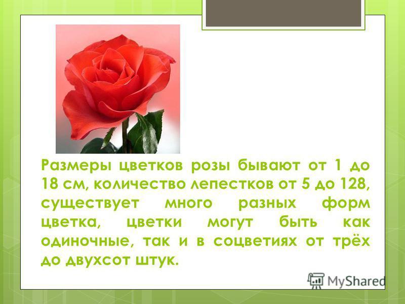 Размеры цветков розы бывают от 1 до 18 см, количество лепестков от 5 до 128, существует много разных форм цветка, цветки могут быть как одиночные, так и в соцветиях от трёх до двухсот штук.