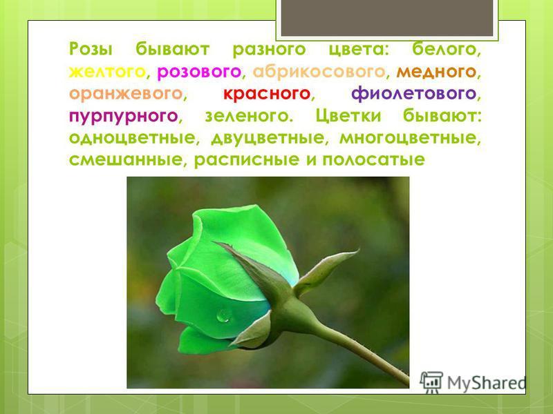 Розы бывают разного цвета: белого, желтого, розового, абрикосового, медного, оранжевого, красного, фиолетового, пурпурного, зеленого. Цветки бывают: одноцветные, двуцветные, многоцветные, смешанные, расписные и полосатые