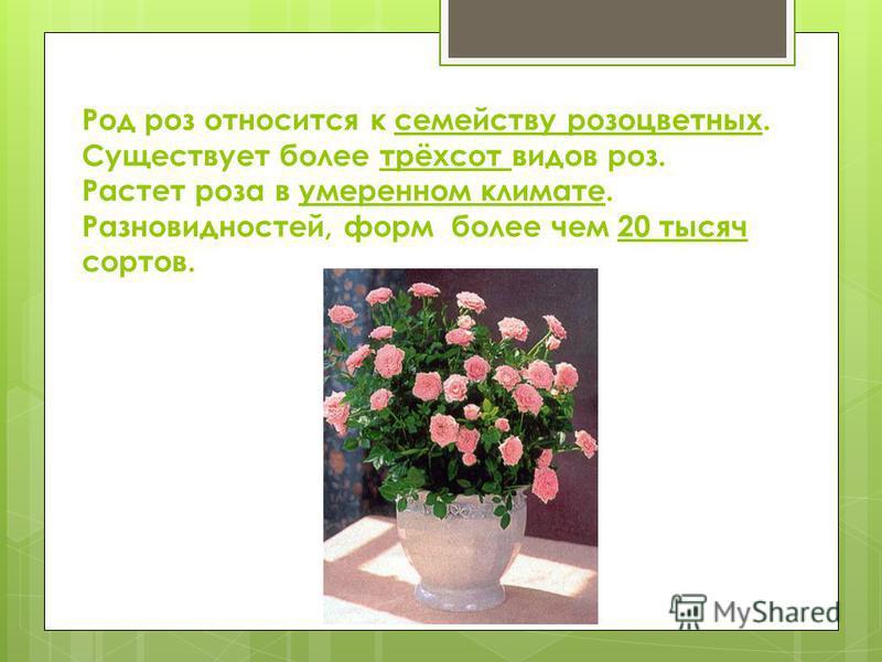 Род роз относится к семейству розоцветных. Существует более трёхсот видов роз. Растет роза в умеренном климате. Разновидностей, форм более чем 20 тысяч сортов.