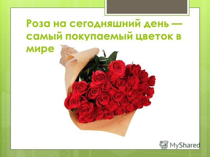 Роза на сегодняшний день самый покупаемый цветок в мире