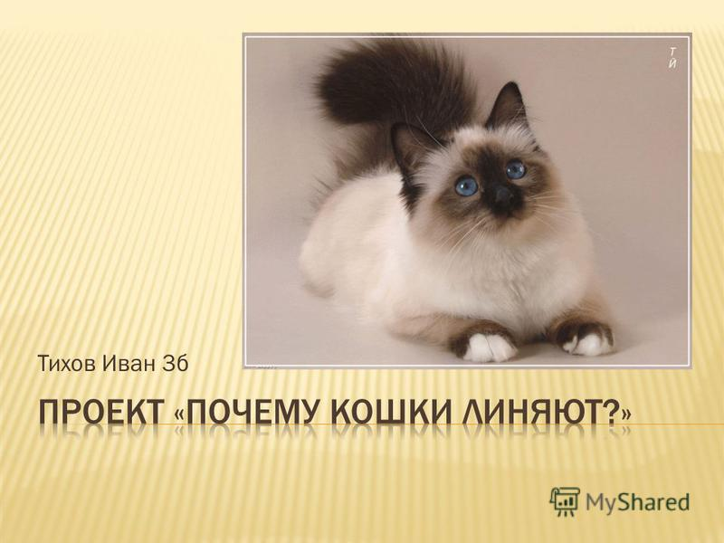 Тихов Иван 3 б