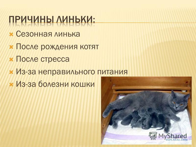 Сезонная линька После рождения котят После стресса Из-за неправильного питания Из-за болезни кошки