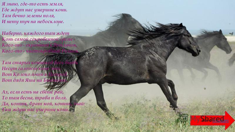 Я знаю, где-то есть земля, Где ждут нас умершие кони. Там вечно зелены поля, И нету туч на небосклоне. Наверно, каждого там ждет Конь самой сокровенной грезы - Кого-то - скромный Светлячок, Кого-то - чистокровный Розыск. Там старых конников всех внов