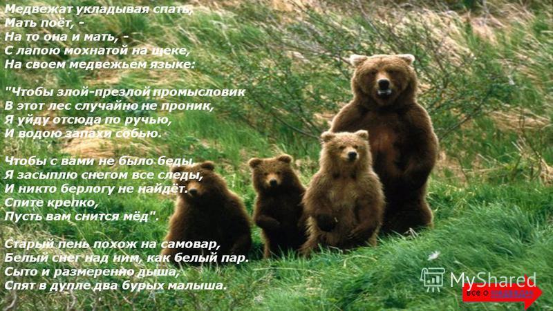 Медвежат укладывая спать, Мать поёт, - На то она и мать, - С лапою мохнатой на щеке, На своем медвежьем языке: