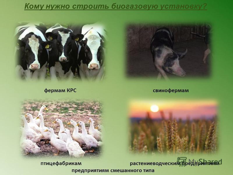 свинофермамфермам КРС птицефабрикамрастениеводческим предприятиям предприятиям смешанного типа Кому нужно строить биогазовую установку?