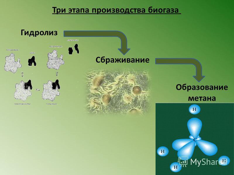 Три этапа производства биогаза Гидролиз Сбраживание Образование метана