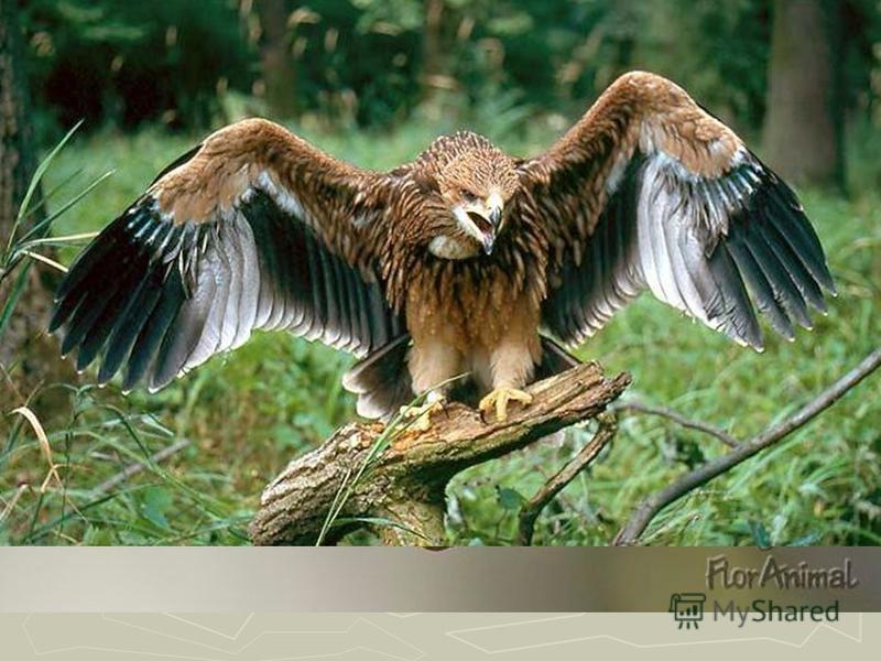 55 видов зверей и 200 видов птиц. От крошечных землероек до лосей, от королька до орла-могильщика.