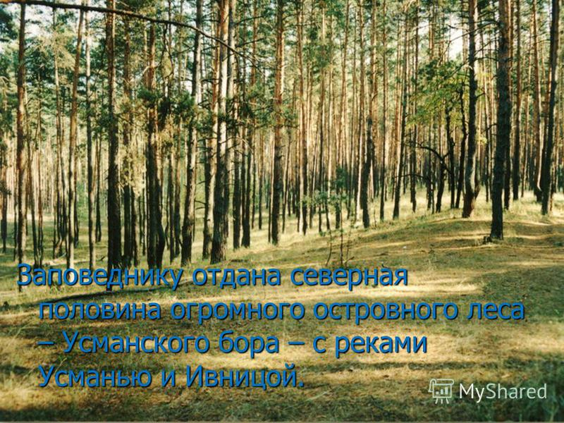 Заповеднику отдана северная половина огромного островного леса – Усманского бора – с реками Усманью и Ивницой.