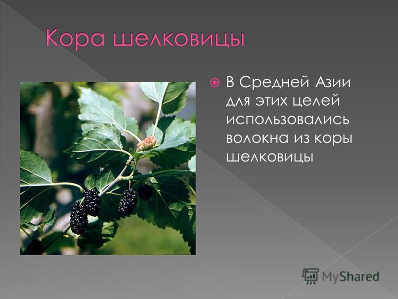 В Средней Азии для этих целей использовались волокна из коры шелковицы