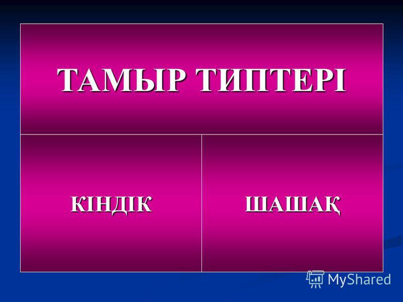 ТАМЫР ТИПТЕРІ КІНДІКШАШАҚ