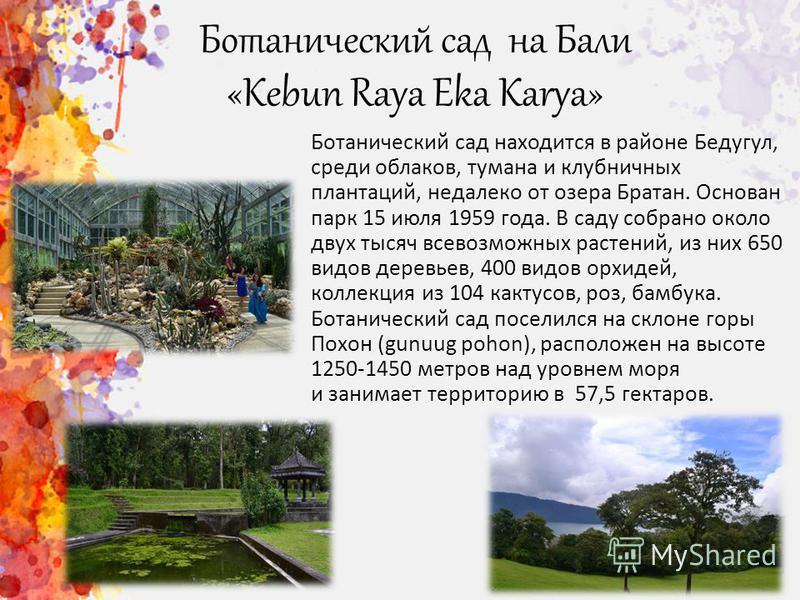 Ботанический сад на Бали «Kebun Raya Eka Karya» Ботанический сад находится в районе Бедугул, среди облаков, тумана и клубничных плантаций, недалеко от озера Братан. Основан парк 15 июля 1959 года. В саду собрано около двух тысяч всевозможных растений