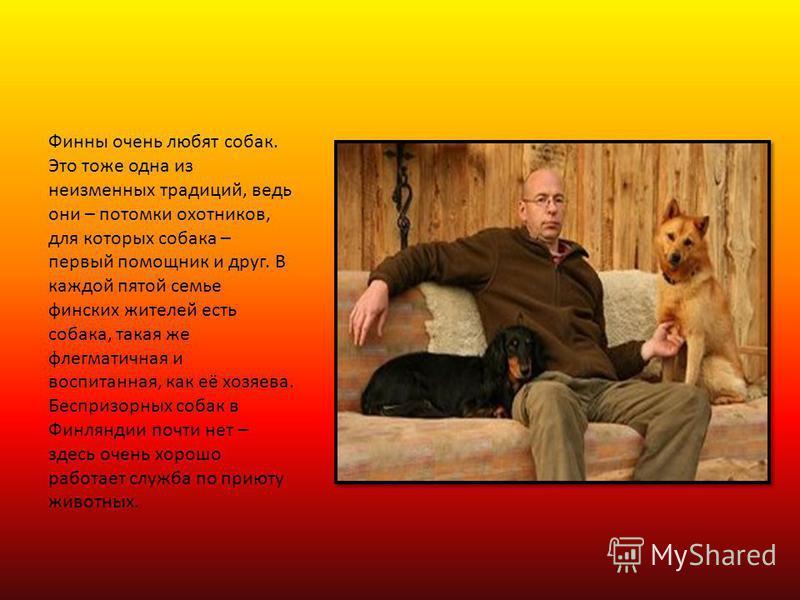 Финны очень любят собак. Это тоже одна из неизменных традиций, ведь они – потомки охотников, для которых собака – первый помощник и друг. В каждой пятой семье финских жителей есть собака, такая же флегматичная и воспитанная, как её хозяева. Беспризор