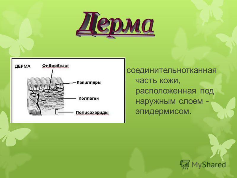 соединительнотканная часть кожи, расположенная под наружным слоем - эпидермисом.