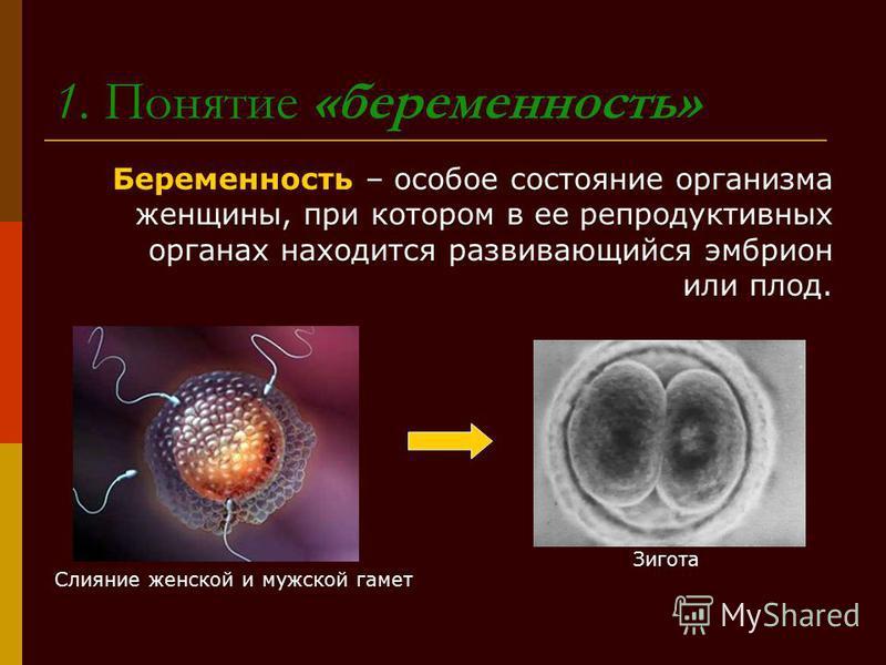 1. Понятие «беременность» Беременность – особое состояние организма женщины, при котором в ее репродуктивных органах находится развивающийся эмбрион или плод. Слияние женской и мужской гамет Зигота