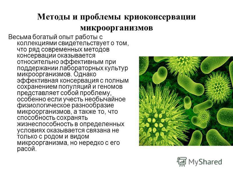 Методы и проблемы криоконсервации микроорганизмов Весьма богатый опыт работы с коллекциями свидетельствует о том, что ряд современных методов консервации оказывается относительно эффективным при поддержании лабораторных культур микроорганизмов. Однак