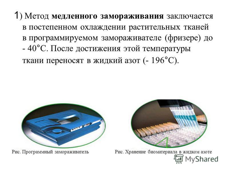 1 ) Метод медленного замораживания заключается в постепенном охлаждении растительных тканей в программируемом замораживателе (фризере) до - 40°С. После достижения этой температуры ткани переносят в жидкий азот (- 196°С). Рис. Программный замораживате