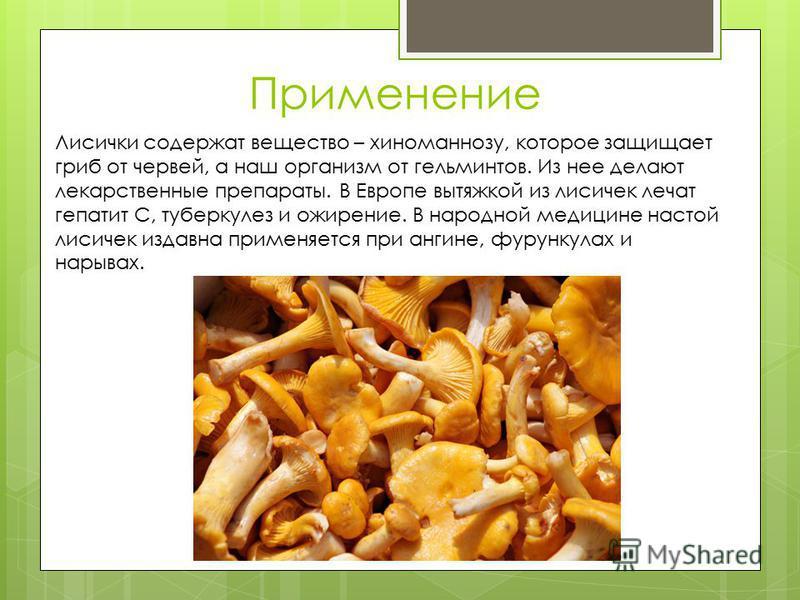 Применение Лисички содержат вещество – хиноманнозу, которое защищает гриб от червей, а наш организм от гельминтов. Из нее делают лекарственные препараты. В Европе вытяжкой из лисичек лечат гепатит С, туберкулез и ожирение. В народной медицине настой