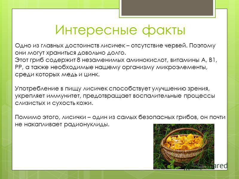 Интересные факты Одно из главных достоинств лисичек – отсутствие червей. Поэтому они могут храниться довольно долго. Этот гриб содержит 8 незаменимых аминокислот, витамины А, В1, РР, а также необходимые нашему организму микроэлементы, среди которых м
