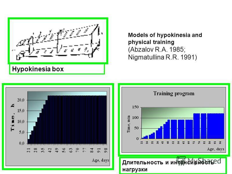 Длительность и интенсивность нагрузки Models of hypokinesia and physical training (Abzalov R.A. 1985; Nigmatullina R.R. 1991) Hypokinesia box