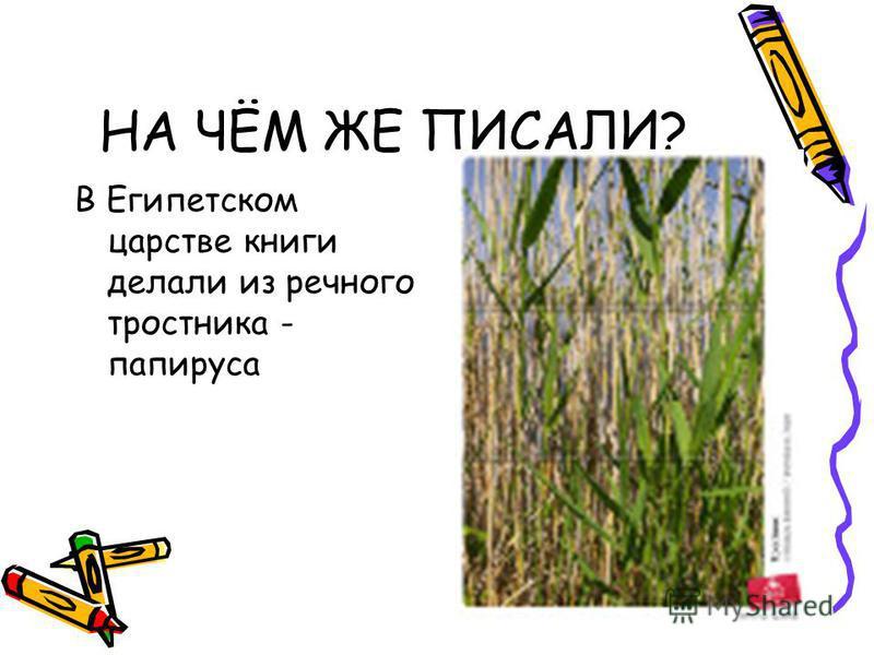 НА ЧЁМ ЖЕ ПИСАЛИ? В Египетском царстве книги делали из речного тростника - папируса
