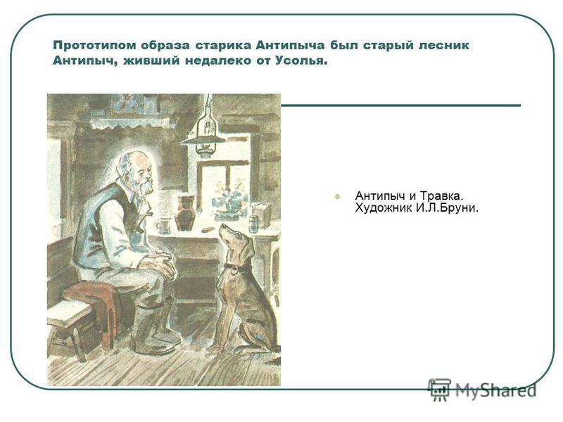 Прототипом образа старика Антипыча был старый лесник Антипыч, живший недалеко от Усолья. Антипыч и Травка. Художник И.Л.Бруни.