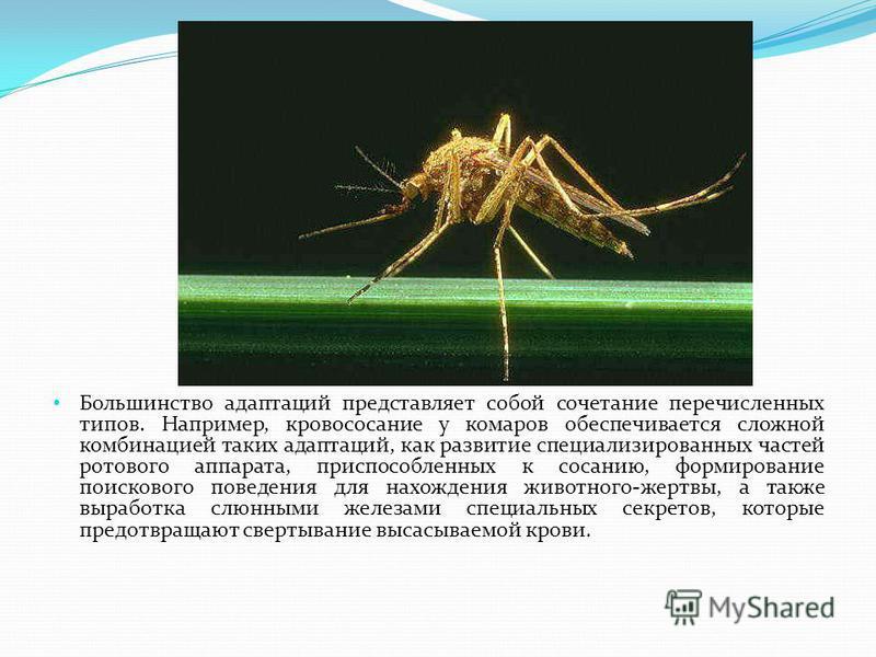 Большинство адаптаций представляет собой сочетание перечисленных типов. Например, кровососание у комаров обеспечивается сложной комбинацией таких адаптаций, как развитие специализированных частей ротового аппарата, приспособленных к сосанию, формиров