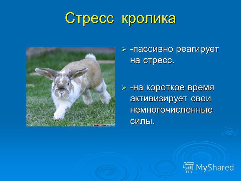 Стресс кролика -пассивно реагирует на стресс. -пассивно реагирует на стресс. -на короткое время активизирует свои немногочисленные силы. -на короткое время активизирует свои немногочисленные силы.