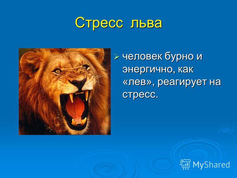 Стресс льва человек бурно и энергично, как «лев», реагирует на стресс. человек бурно и энергично, как «лев», реагирует на стресс.