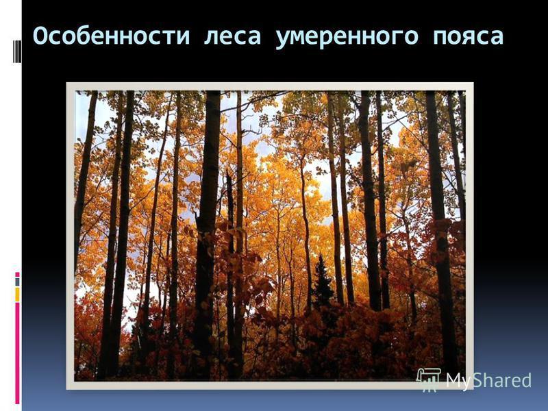 Особенности леса умеренного пояса