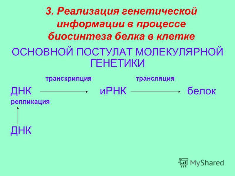 3. Реализация генетической информации в процессе биосинтеза белка в клетке ОСНОВНОЙ ПОСТУЛАТ МОЛЕКУЛЯРНОЙ ГЕНЕТИКИ транскрипция трансляция ДНК иРНК белок репликация ДНК