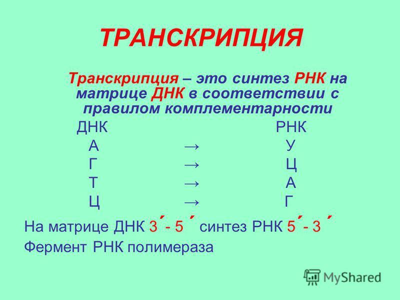 ТРАНСКРИПЦИЯ Транскрипция – это синтез РНК на матрице ДНК в соответствии с правилом комплементарности ДНК РНК А У Г Ц Т А Ц Г На матрице ДНК 3 ´ - 5 ´ синтез РНК 5 ´ - 3 ´ Фермент РНК полимераза