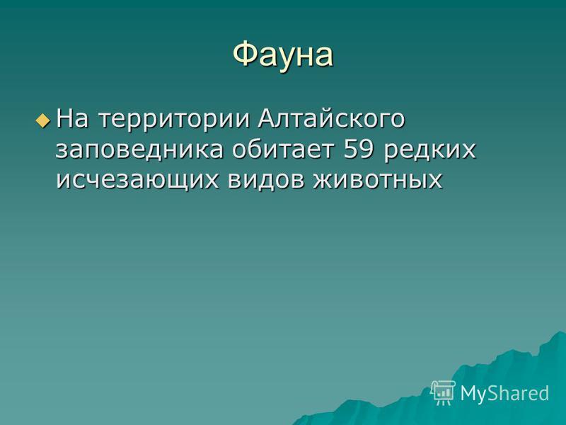 Фауна На территории Алтайского заповедника обитает 59 редких исчезающих видов животных На территории Алтайского заповедника обитает 59 редких исчезающих видов животных