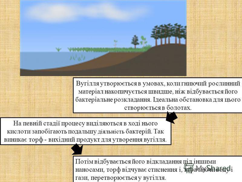 Вугілля утворюється в умовах, коли гниючий рослинний матеріал накопичується швидше, ніж відбувається його бактеріальне розкладання. Ідеальна обстановка для цього створюється в болотах. На певній стадії процесу виділяються в ході нього кислоти запобіг