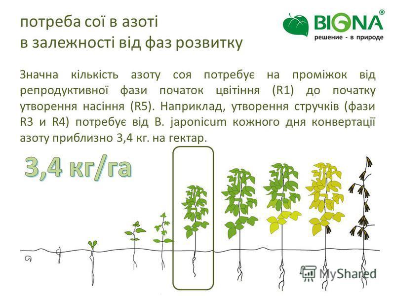 потреба сої в азоті в залежності від фаз розвитку Значна кількість азоту соя потребує на проміжок від репродуктивної фази початок цвітіння (R1) до початку утворення насіння (R5). Наприклад, утворення стручків (фази R3 и R4) потребує від B. japonicum