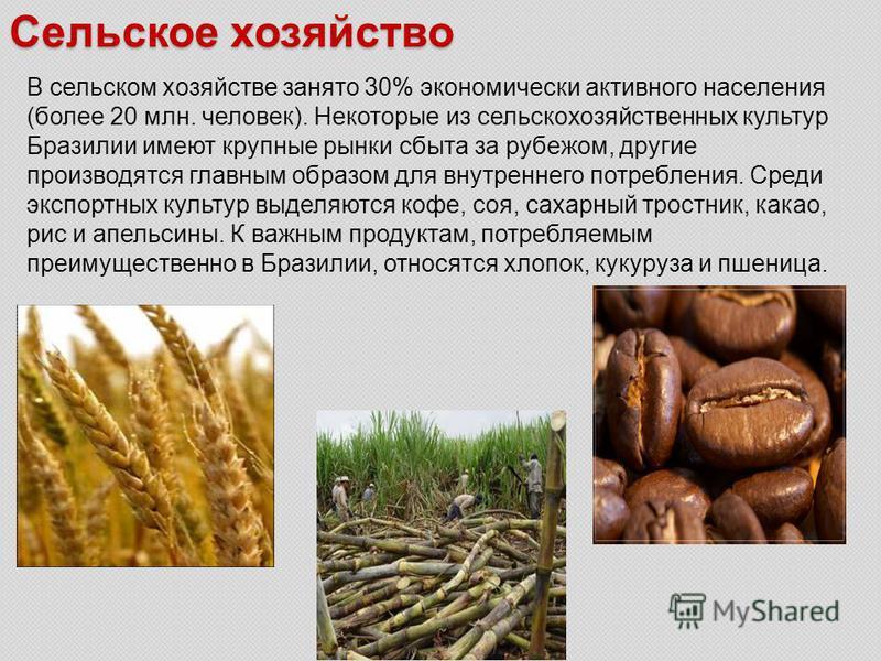 Сельское хозяйство В сельском хозяйстве занято 30% экономически активного населения (более 20 млн. человек). Некоторые из сельскохозяйственных культур Бразилии имеют крупные рынки сбыта за рубежом, другие производятся главным образом для внутреннего