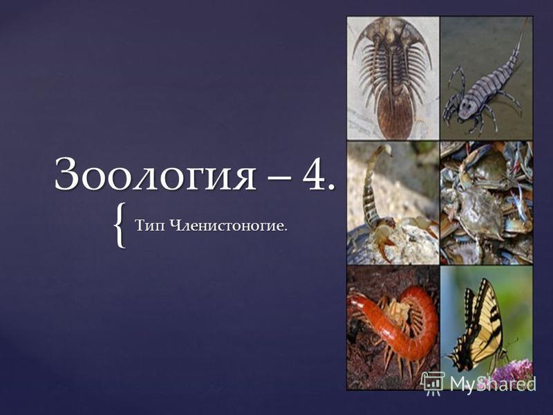 { Зоология – 4. Тип Членистоногие.