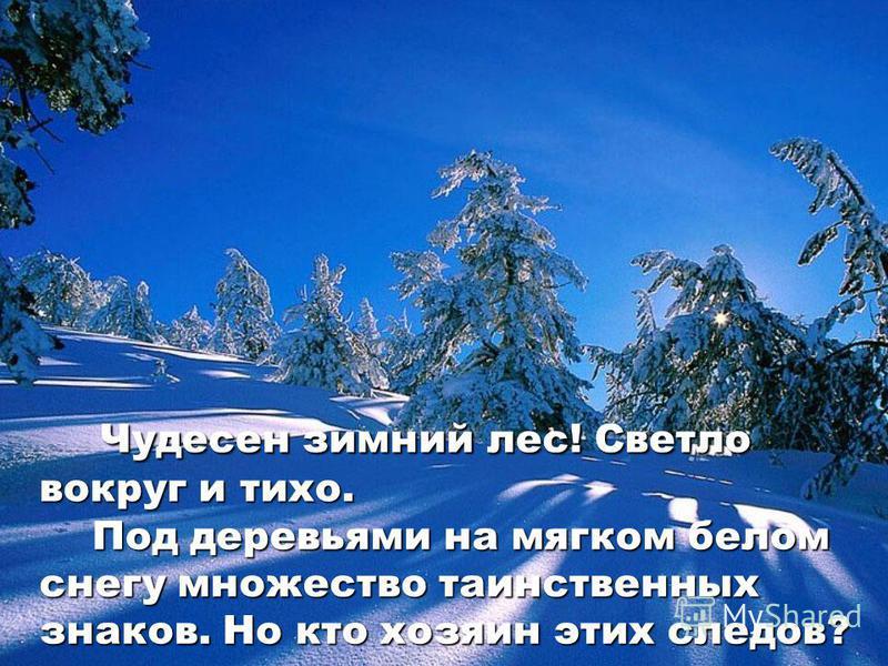 чудесен зимний лес светло вокруг и тихо под деревьями на мягком белом снегу множество таинственных знаков но кто хозяин этих следов чудесен зимний лес светло вокруг и тихо под деревьями на мягком белом снегу множество таинственных знаков но кто хозяи