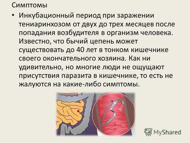 Симптомы Инкубационный период при заражении тениаринхозом от двух до трех месяцев после попадания возбудителя в организм человека. Известно, что бычий цепень может существовать до 40 лет в тонком кишечнике своего окончательного хозяина. Как ни удивит