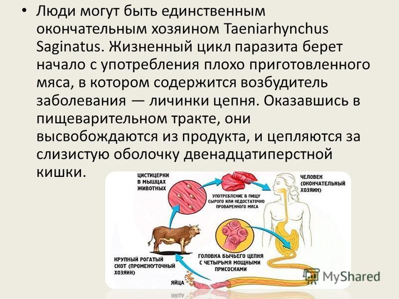 Люди могут быть единственным окончательным хозяином Taeniarhynchus Saginatus. Жизненный цикл паразита берет начало с употребления плохо приготовленного мяса, в котором содержится возбудитель заболевания личинки цепня. Оказавшись в пищеварительном тра