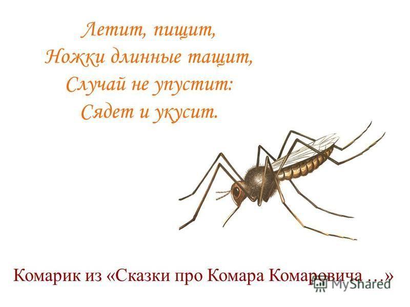 Летит, пищит, Ножки длинные тащит, Случай не упустит: Сядет и укусит. Комарик из «Сказки про Комара Комаровича …»