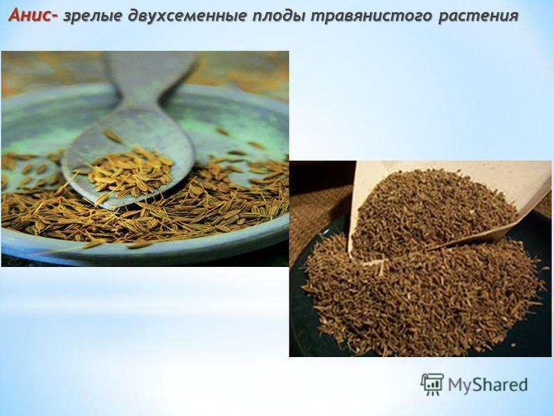 Анис- зрелые двух семенные плоды травянистого растения