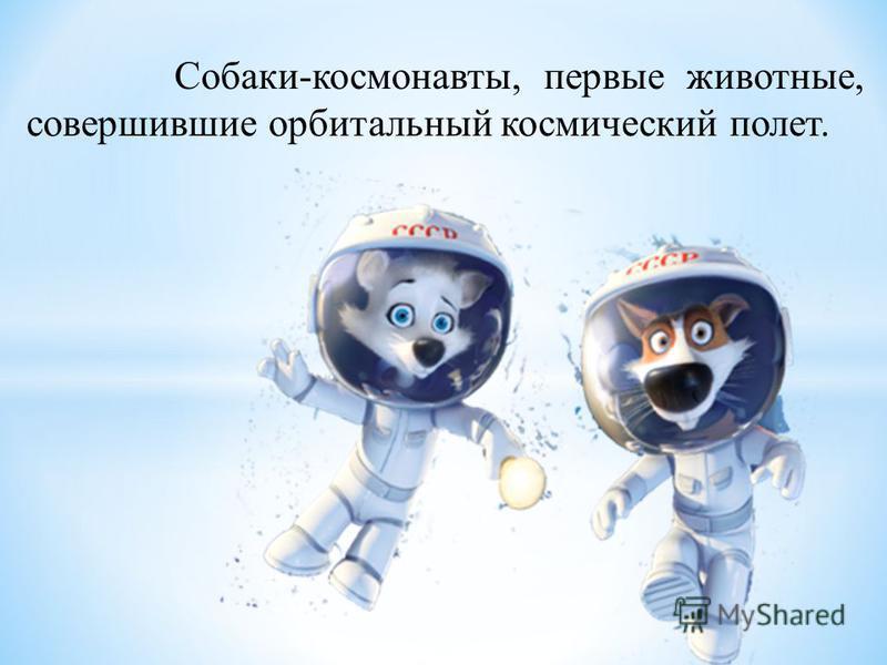 Собаки-космонавты, первые животные, совершившие орбитальный космический полет.