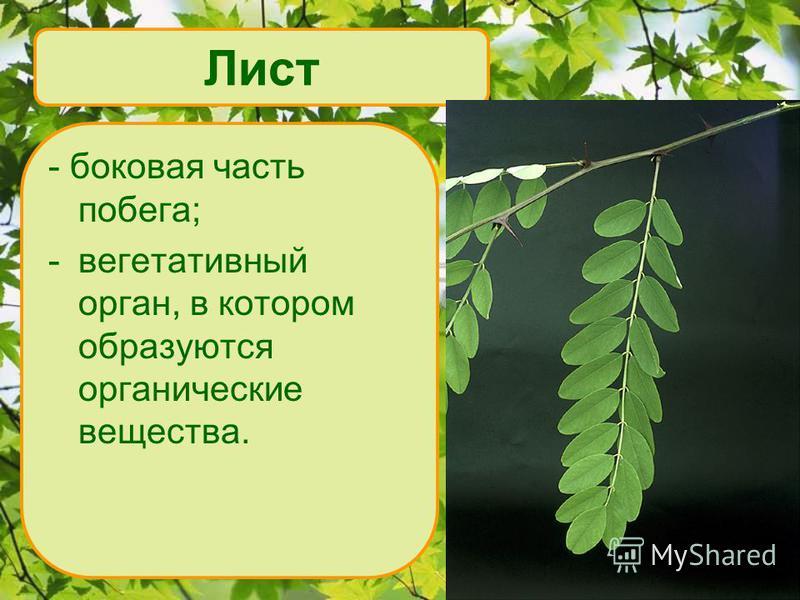 Лист - боковая часть побега; -вегетативный орган, в котором образуются органические вещества.