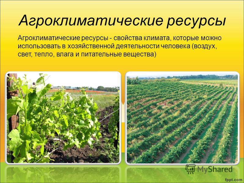 Агроклиматические ресурсы Агроклиматические ресурсы - свойства климата, которые можно использовать в хозяйственной деятельности человека (воздух, свет, тепло, влага и питательные вещества)