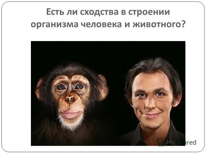 Есть ли сходства в строении организма человека и животного ?