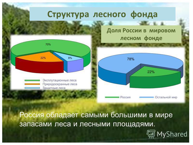 Структура лесного фонда Доля России в мировом лесном фонде Россия обладает самыми большими в мире запасами леса и лесными площадями.