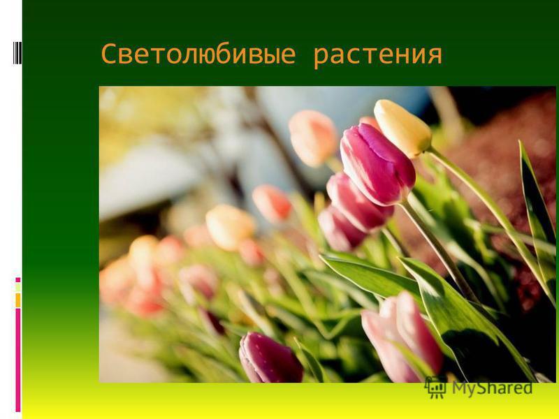 Светолюбивые растения
