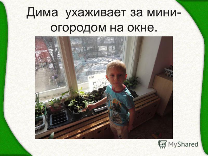 Дима ухаживает за мини- огородом на окне.